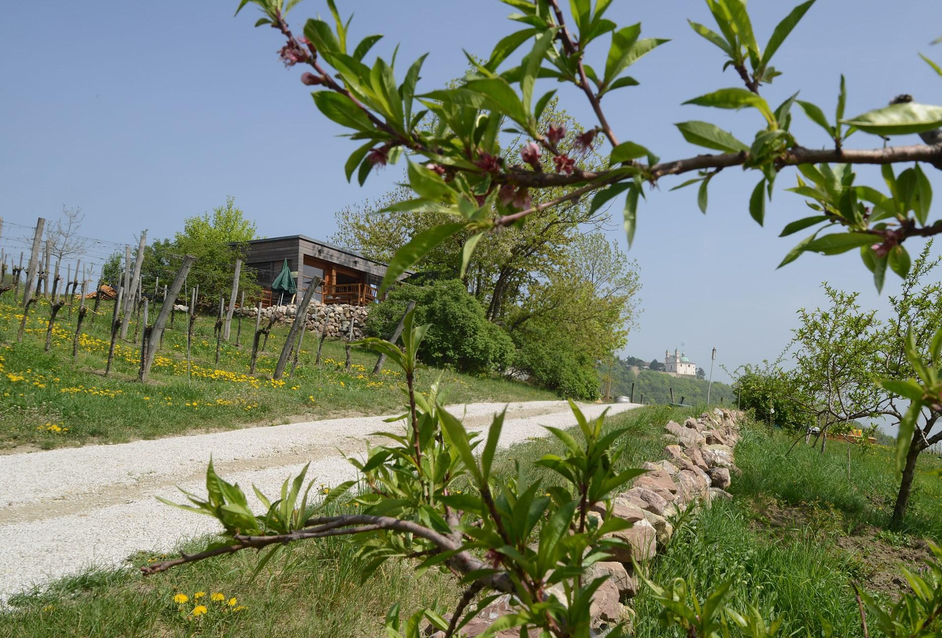 Blick durch Weingartenpfirsichbaeume - Theresa Bentz.jpg